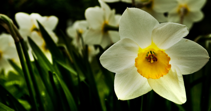 Forår og pinse